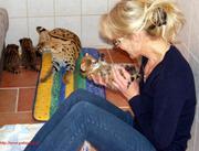Каракал,  Сервал продам ручных котят