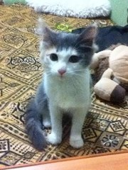 Ласковый котенок ищет дом!